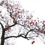 autumn (25)