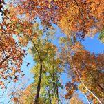 autumn (175)