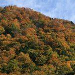 autumn (1290)