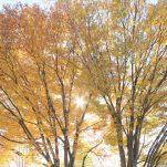 autumn (1390)