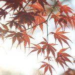 autumn (1280)