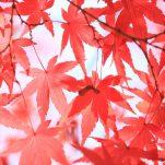 autumn (1651)