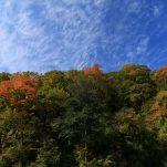 autumn (791)