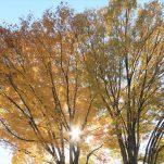 autumn (1371)