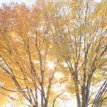 autumn (1387)