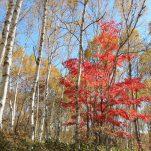autumn (213)