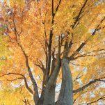 autumn (1332)
