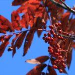 autumn (958)