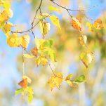 autumn (681)