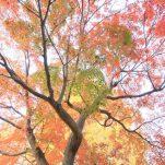 autumn (1697)