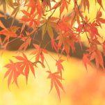 autumn (1711)