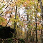 autumn (451)