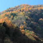 autumn (389)