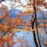autumn (919)