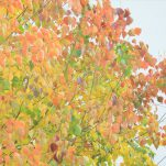 autumn (1729)