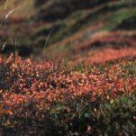 autumn (141)