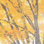 autumn (1399)