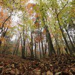 autumn (439)