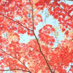 autumn (239)