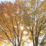 autumn (1389)