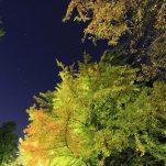 autumn (1000)