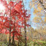 autumn (198)