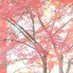 autumn (1672)