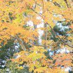 autumn (1305)