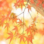 autumn (1718)