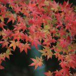 autumn (1770)