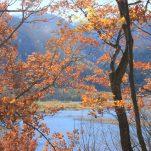 autumn (924)