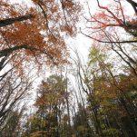 autumn (444)