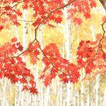 autumn (248)