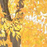 autumn (1422)