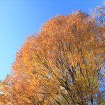 autumn (1320)