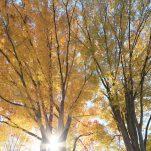 autumn (1368)