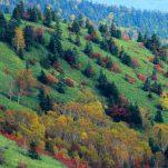autumn (94)