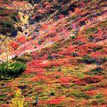autumn (106)