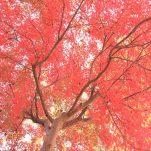 autumn (1515)