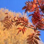 autumn (959)
