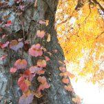 autumn (1547)