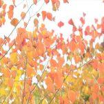 autumn (1742)