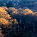 autumn (427)