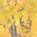 autumn (1436)