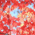 autumn (240)
