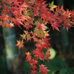 autumn (1813)