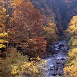 autumn (29)