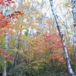 autumn (338)