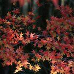 autumn (1815)