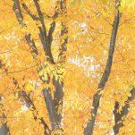 autumn (1424)